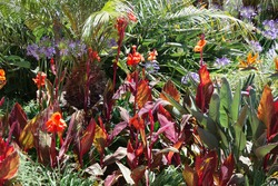 Full frame view of a part of a lush garden full of colorful plants and flowers including orange lilies, strelitzia bird-of-paradise plants, agapanthus flowers and a small palm tree