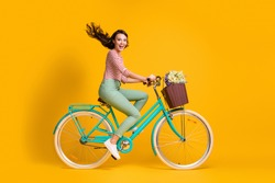 Full length body size side profile photo of cheerful girl riding blue bicycle with basket of flowers isolated on vibrant yellow color background