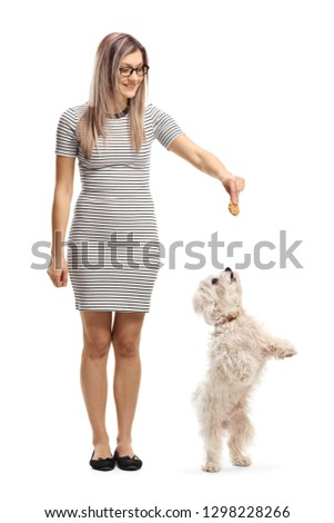 Full length portrait of a young woman giving a biscuit to a maltese poodle dog standing on back paws isolated on white background