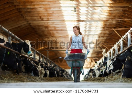 Full length portrait of cheerful young woman pushing cart while working in cow shed at farm, copy space