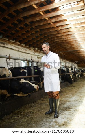 Full length portrait of mature farm worker wearing lab coat using digital tablet standing in cowshed of dairy factory, copy space