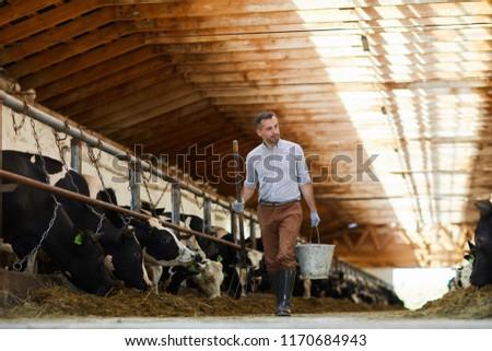 Full length portrait of modern farm worker  holding buckets walking towards camera in sunlit cow shed, copy space