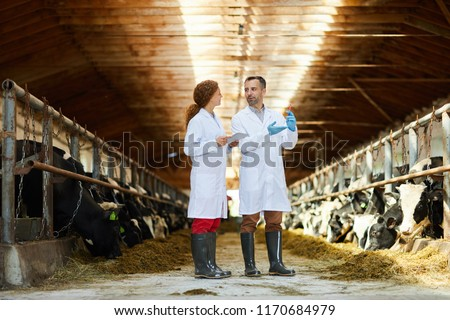 Full length  portrait of two veterinarians wearing lab coats working at farm giving vaccine shots to cows, copy space