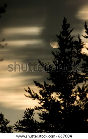 Full Moon : Moving Light and Tree silhouette : Halloween