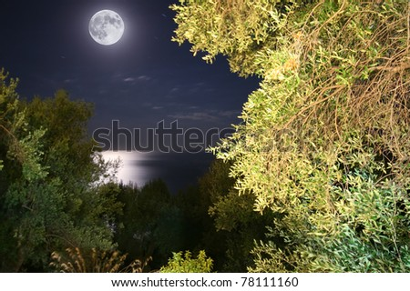 full moon night in a forest in front of the sea