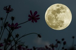 Full moon on the sky with silhouette flowers at night.
