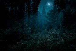 Full moon over the spruce trees of magic mystery night forest. Halloween backdrop.