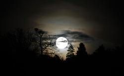 full moon rising through the trees