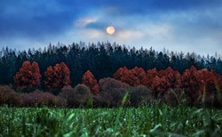 Full moon scenery. Mysterious landscape in cold tones. Night meadow with grass and red trees under the full moon and dramatic night cloudy sky. Big moon over pine trees in field. Dew drops on grass.
