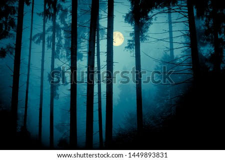 Full moon through the spruce trees in magic mystery night forest. Halloween backdrop.