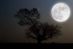 Full moon with stars over tree on darkness sky.