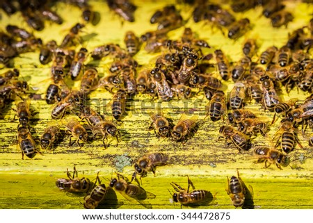 Full of honey beehives in countryside