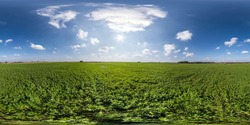 full seamless spherical hdri panorama 360 degrees angle view on among green fields in summer day with awesome clouds in equirectangular projection, ready for VR AR virtual reality content