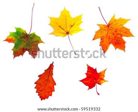 Full-size composite photo of various autumn leaves isolated on white background
