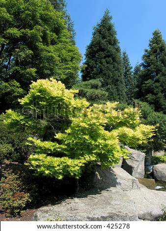 Full-size view of tiny japanese tree