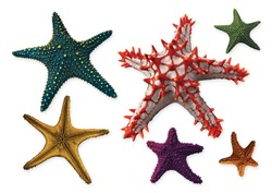 Full spectrum of starfish isolated on a white background