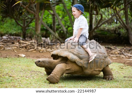 Fun activities in Mauritius. 4 years old boy riding giant turtle.