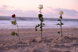Funeral flower, lonely white and red rose flower at the beach, water background with copy space, burial at sea. Empty place for a text. Funeral symbol and Condolence card concept. Selective focus.