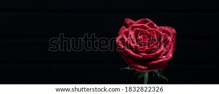 Funeral red rose on a black background with free space for text. Condolence card. mourning concept. Сток-фото ©