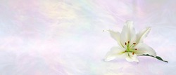 Funeral Wake Order of Service Lily Banner Background - white lily head against a subtle angelic ethereal gaseous pastel coloured background with copy space