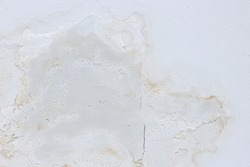 Fungal mold on an interior wall creating health problems for the home owners. Molds can thrive on any organic matter including ceilings, walls and floors of homes with moisture management problems.