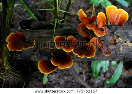 Fungi in forest, Thailand.