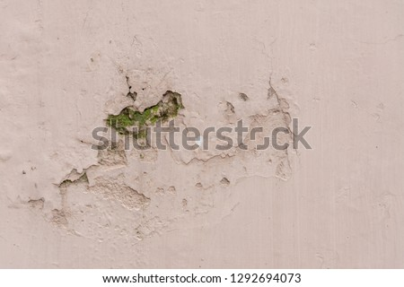 fungus inside wall due to cheap paint quality