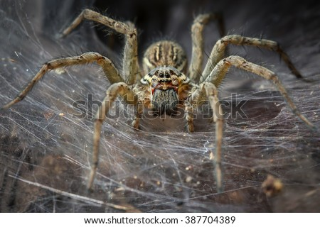 Funnel Spider Macro