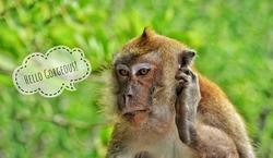 Funny animal photo with hello text caption