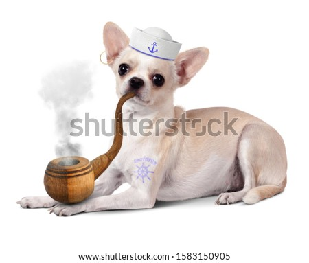 Funny animal sailor, dog with pipe and mariner hat #1583150905
