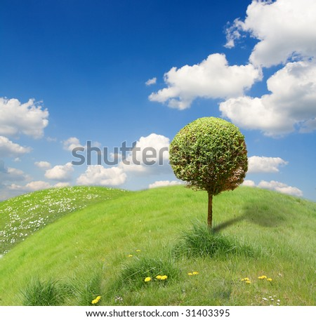 Funny beautiful landscape with  tree  in ecology-look