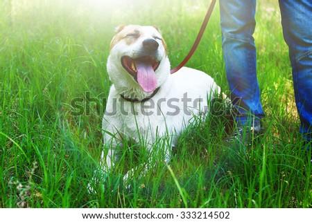 Funny big alabai dog and owner, outdoors