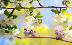 funny birds and chicks sparrows sit on a branch in a sunny blooming garden with their feathers spread out