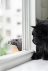 Funny black cat and pigeon look at each other through the window in summer.