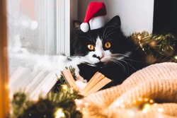 Funny Black cat on window sill in santa hat read book look to camera. Xmas vibe, red gift presents, ornament, candle bokeh light home. Wallpaper, postcard greeting. Merry Christmas and Happy New Year
