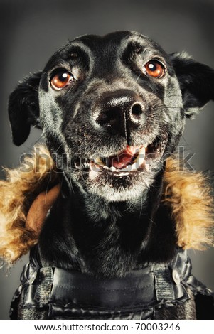 Funny black dog dressed for winter