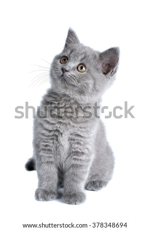 Small Toy Cat Yellow Green Eyes Paw Up