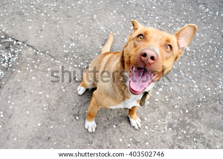 Funny brown dog sitting on asphalt.