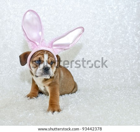 Funny Bulldog puppy wearing pink bunny ears with copy space, on a white background.