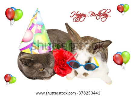 Free Photos Party Pets With Funny Cat And Bunny Happy Birthday Card