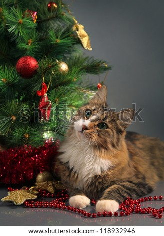 funny cat and christmas tree