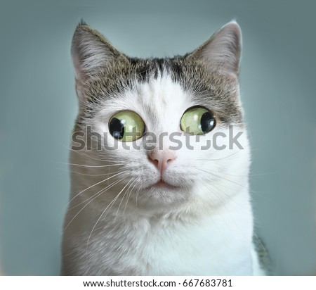 funny cat at ophtalmologist appointmet squinting