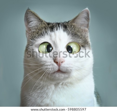 funny cat at ophthalmologist appointmet squinting close up portrait #598805597