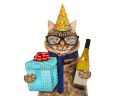 Funny cat celebrates birthday