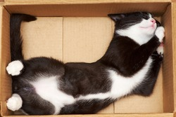 Funny cat fills the volume of the box. The tip of the tail at 90 degrees.