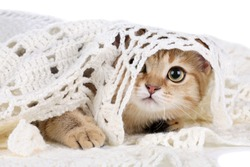 Funny cat hiding under a blanket