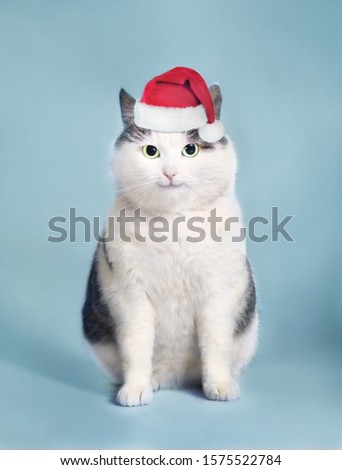 funny cat in santa hat and framed picture with copy space christmas post card photo isolated on white