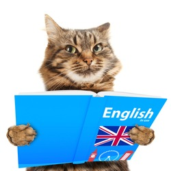 Funny cat is learning English. Reading a book.