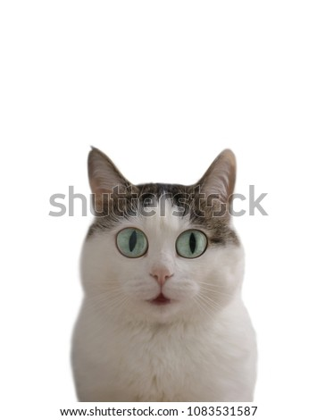 funny cat meme pic with surprise question expression blue wide open eyes and mouth with copy space isolated on white