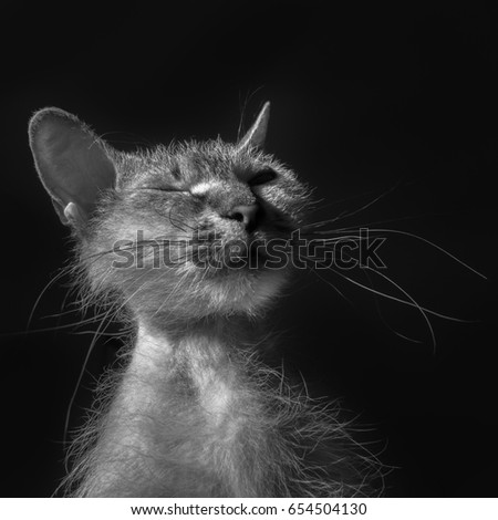 Funny cat on a black background #654504130